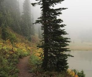 fog, nature, and landscape image