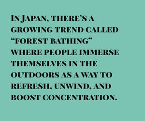 concentrate, japan, and japanese image