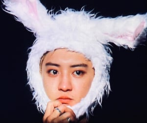 boys, bunny, and exo image