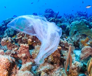 article and plastic pollution image