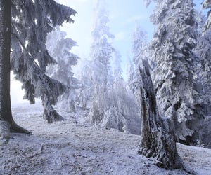 nature, snow, and winters image