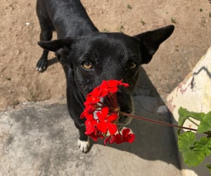 dog, doh, and flowers image