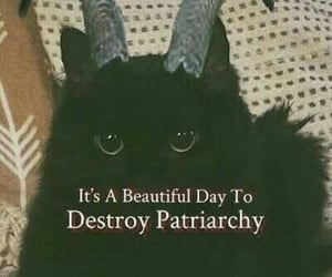 cat and patriarchy image