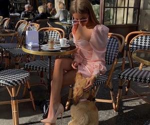 fashion, chic, and dog image