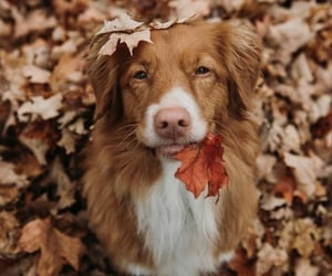 leaves, animals, and autumn image