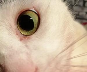 beautiful, Gatos, and cat image