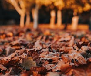 autumn, autumnal, and closeup image