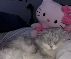 aesthetic, cat, and hello kitty image
