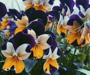 botanic, flowers, and nature image