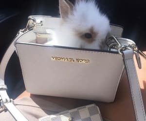 bunny, animal, and Michael Kors image