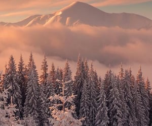 december, forest, and snow image
