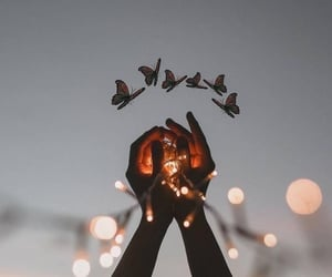 light, butterfly, and night image