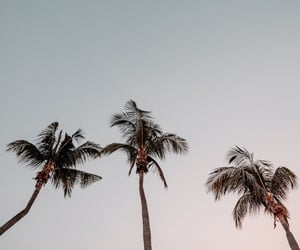 goals, tropical, and wanderlust image