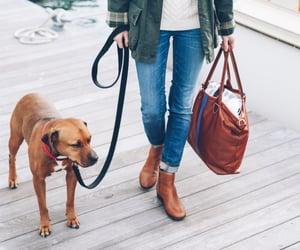 best friend, dog, and travel bag image