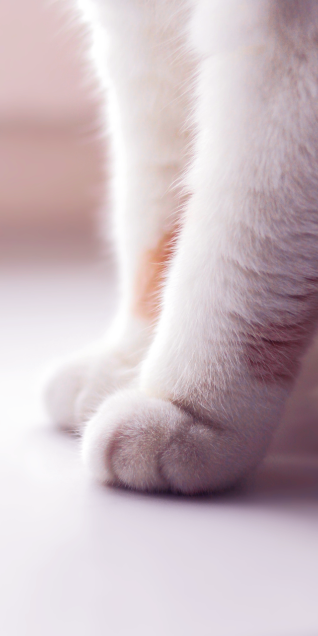 Animals Baby Background Beautiful Beauty Cat Color Colorful Cute Animals Fashion Fashionable Inspiration Iphone Kawaii Kitten Kitty Luxury Nature Pastel Paw Plush Pretty Softy Wallpaper Wallpapers We Heart It White Kitty Cute