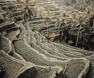bali, landscape, and palmtrees image
