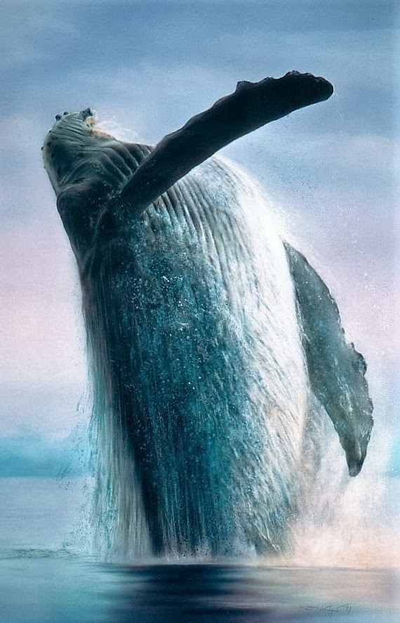 animal and whale image