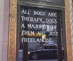 madison avenue, new york city, and dogs are love image