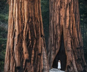 california, give thanks, and sequoia national park image