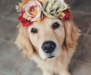 dog, pet, and flowers image