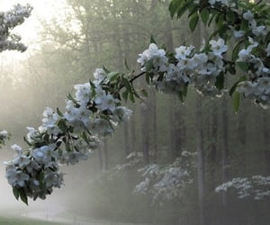 flowers, nature, and pale image
