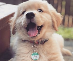 dog dogs, love lovely, and pet pets image