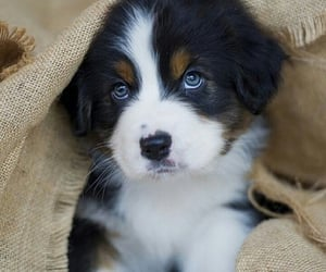 dog, doggy, and puppies image