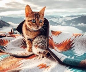 animals, fall, and kitten image