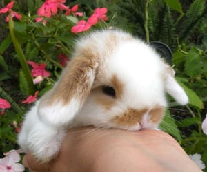 bunny, soft, and aesthetic image