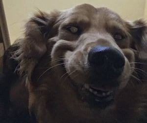 derp, pets, and dog image