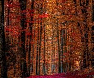 autumn, carpet, and trees image