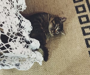animal, tabby cat, and animals image