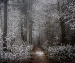 adventure, beautiful, and fog image