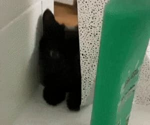 gif, cat don't care, and bad kitty image