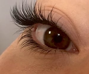 brown, eyelashes, and eyes image