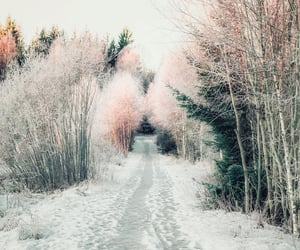 frost, landscape, and nature image