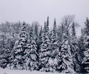 cold, forest, and frosty image
