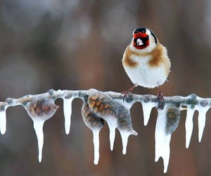 bird, ice, and snow image