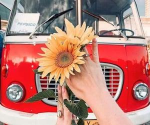 sunflowers, van, and girasoles image