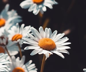 aesthetic, wallpaper, and flowers image