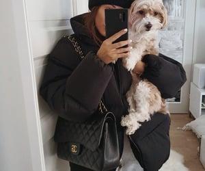 bag, chanel, and dog image