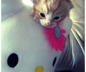 hello kitty, cute, and kitty image
