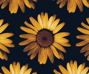 beautiful, flowers, and sunflower image