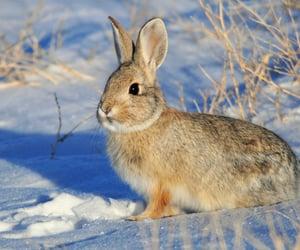 animals, rabbit, and cute image