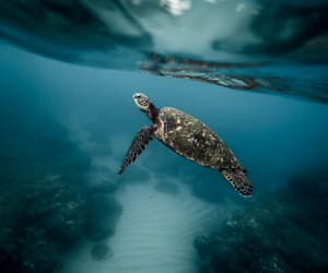 animal, turtle, and sea image