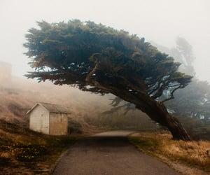 art, fog, and landscape image