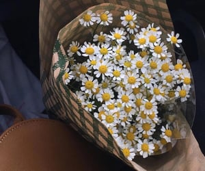 daisy, flowers, and bouquet image