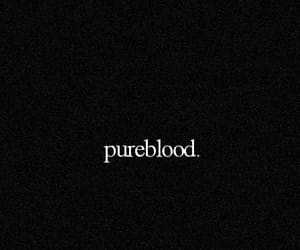 harry potter and pureblood image
