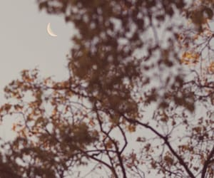 autumn, gloomy, and moon image