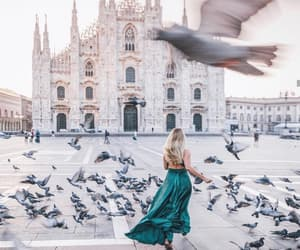 beautiful, birds, and city image